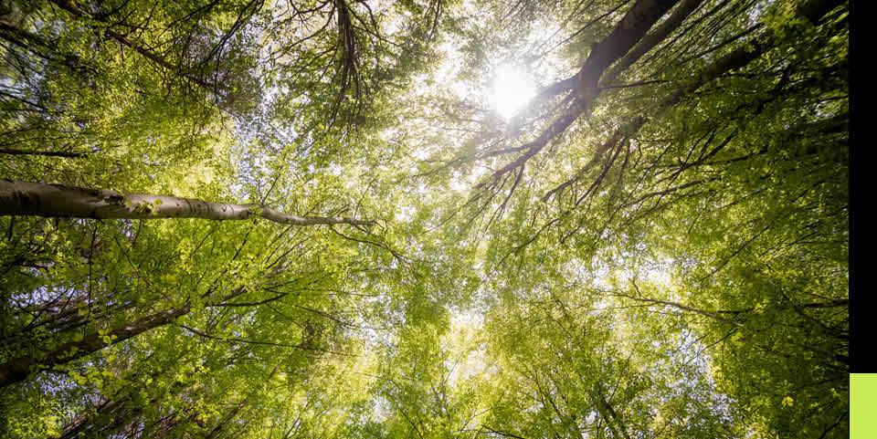 Nuevas prácticas de la Tributación Ambiental